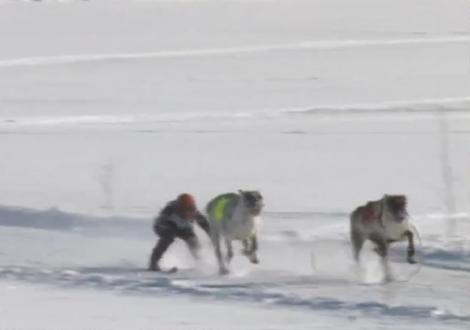 La gran carrera ártica
